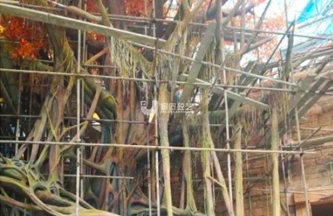 河北-中唐天元谷大型榕树